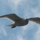 Gull watching by Tazfiend