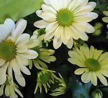 A pocketful of Daisies by MarianBendeth