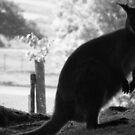 Wallaby by Lazertooth