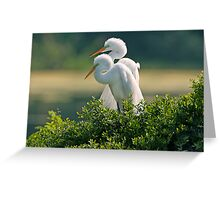 Happily Married Egrets Greeting Card