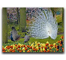 Springtime Love in the Flower Park Photographic Print