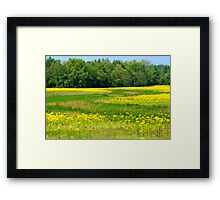 Fields of MUSTARD WEED..... Framed Print