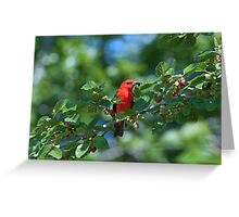 Tommy's Tanager Greeting Card
