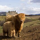 Highland County by Lynne Morris