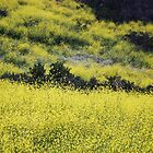 MUSTARD FIELD by fsmitchellphoto
