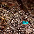 Nest to Be by BornBarefoot