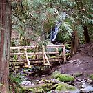 Coal Creek Falls Walking Bridge by Stacey Lynn Payne