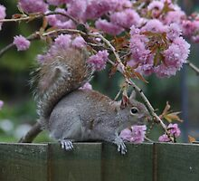 Grey Squirrel looking for Treats by AnnDixon
