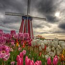 Tulip Festival by Deri Dority