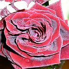 RED ROSE! by D. D.AMO
