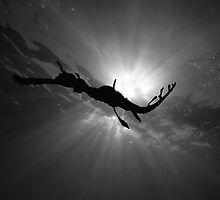 Seadragon & Sunlight by MattTworkowski