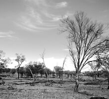 Basic Bush © Western Queensland by Vicki Ferrari