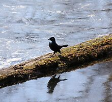 A little bird strutting his stuff on a log above the water by capturingsmiles