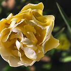 A Rose or a Tulip.....? by Adri  Padmos