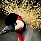Crowned Crane by Stan Owen