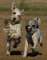 Rompin' at the Dog Park by Peggy  Woods Ryan