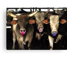 Bubble Gum Blowing Rodeo Bull Cows Western pop Art Southwest Cowboy culture Canvas Print