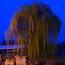 Earth Day Weeping Willow by Geezer94