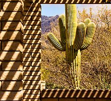 Patterned Saguaro by Justin Baer