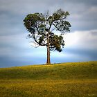 Solitude standing... by TmacScapes