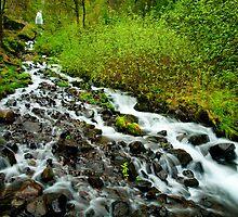 Spring Cascades by DawsonImages
