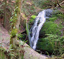 Coal Creek Falls by Stacey Lynn Payne