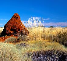 Termite Mound in Spinifex by Paul Mayall