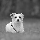 Dog Portrait 1 by MichaelaSteindl