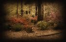 Spring Garden by Sandy Keeton