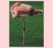 Lesser Flamingo T-Shirt by Robert Howington