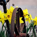Daffodills & Wheel by Stan Owen
