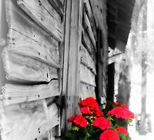 Old Barn with flowers by Patricia Cleveland