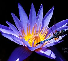 Dragonfly and Water Lily by Julie Everhart