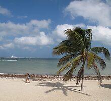 Palm Tree by broerse1