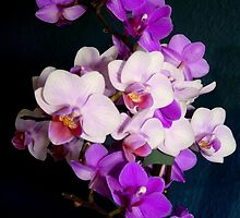 Bunch of orchids by bubblehex08