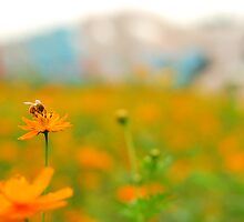 A typical day of a bee by Jerald Guillermo