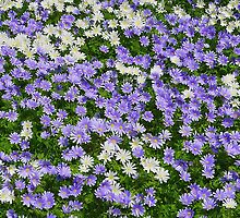 Daisy Patch by relayer51