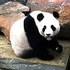 Giant Panda by Tara Schultz