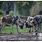 African Wild Dogs by James Troi