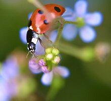 Lovely Ladybird by missmoneypenny
