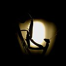 Mantis silhouette by jimmy hoffman