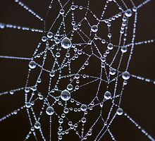Spider Web with Dew by Gary Boudreau