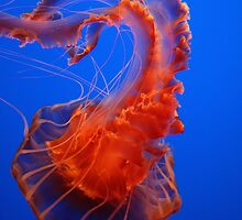 Red Jelly-Fish by Rob03