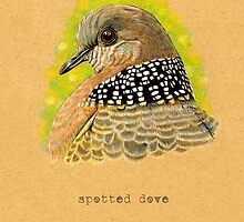 Spotted Dove Bird by Revelle Taillon