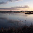 Amherst Marsh by TheCanadianBear