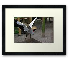 Crowned Crane Framed Print