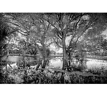 ReachingTrees Photographic Print