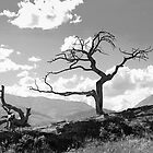Withered Tree by Chad Kruger