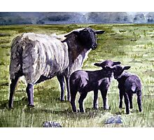 """""""Watching With Mother"""" - """"Sooty Lambs"""" Photographic Print"""