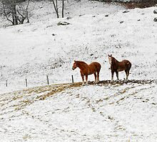 Horses After Vermont Snow by David Myles Stam